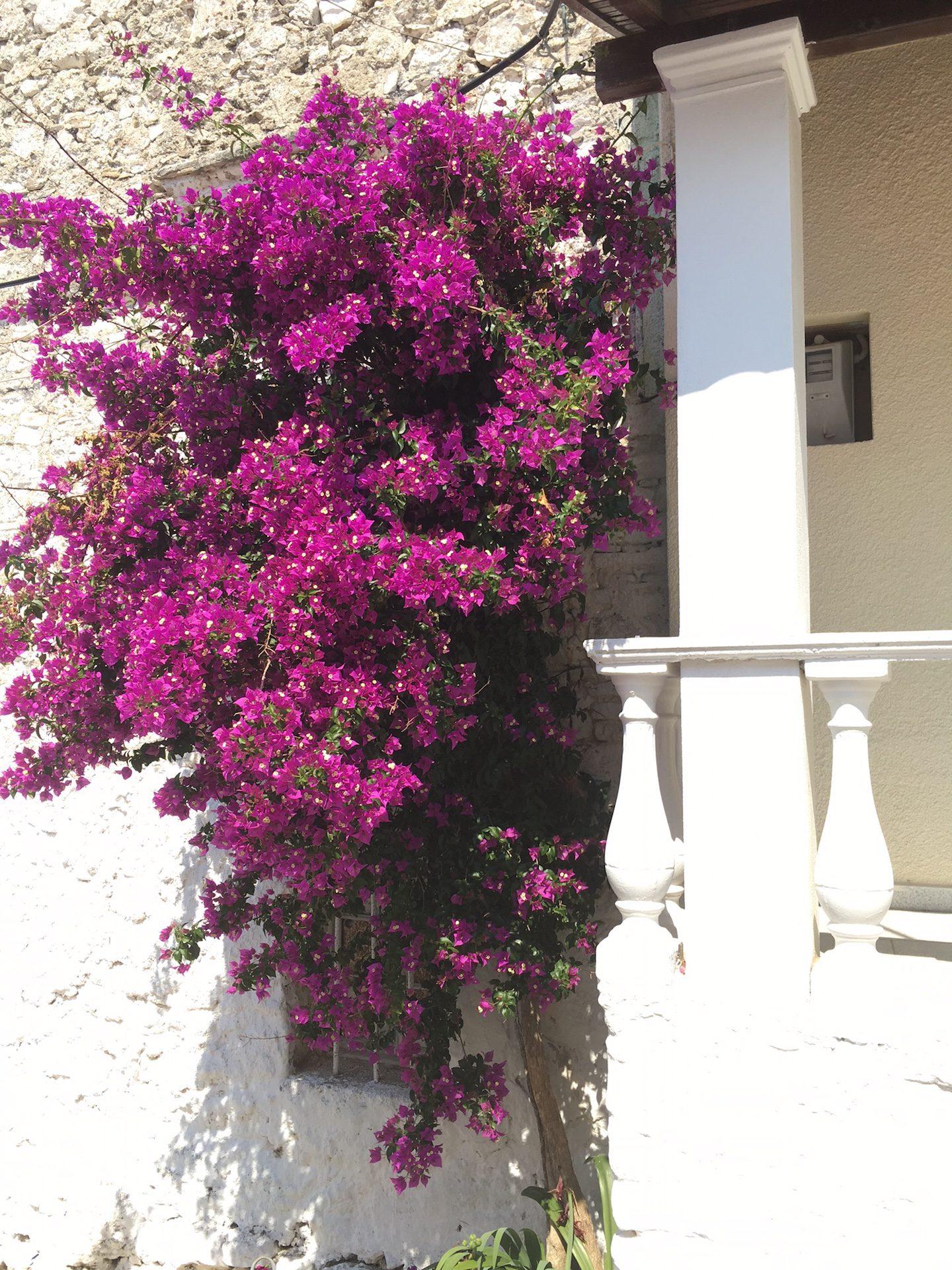 Meine Top 5 Reisetipps für Korfu