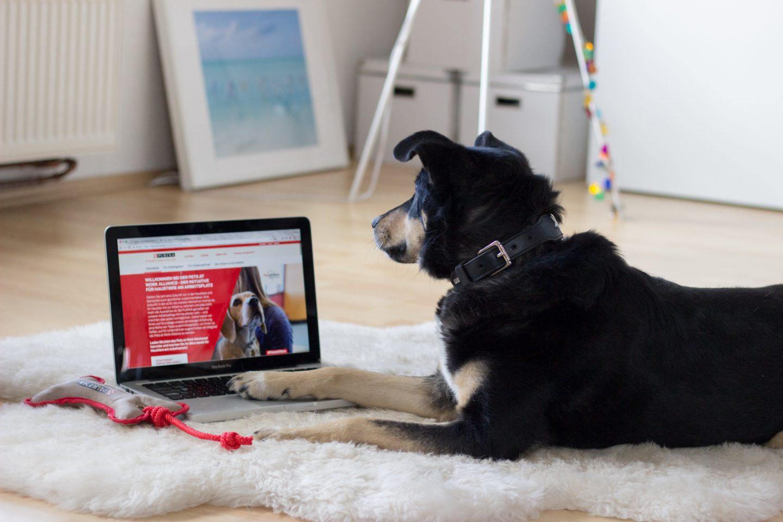 Bürohund Tipps und Tricks