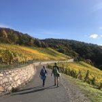 ein-Paar-wander-auf-dem-Rheinsteig-bei-Sonnenschein